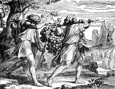 Ту бе Ав - мераглим - виноград
