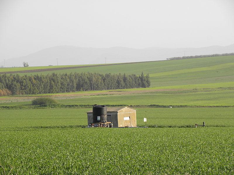 Изреельская долина - поля и луга