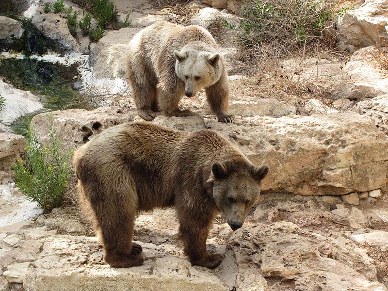 животные в Библейском зоопарке Иерусалима