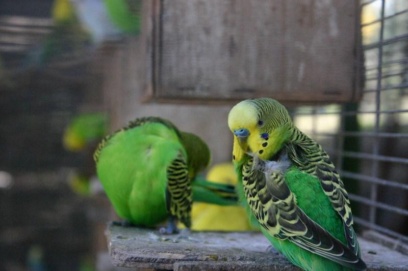Аттракция для детей на севере - зоопарк в Дгании Алеф