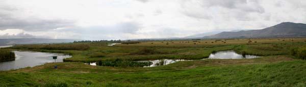 агамон ахула - перелетные птицы