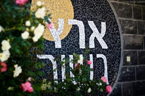 Оливковое масло на Голанах - Израиль