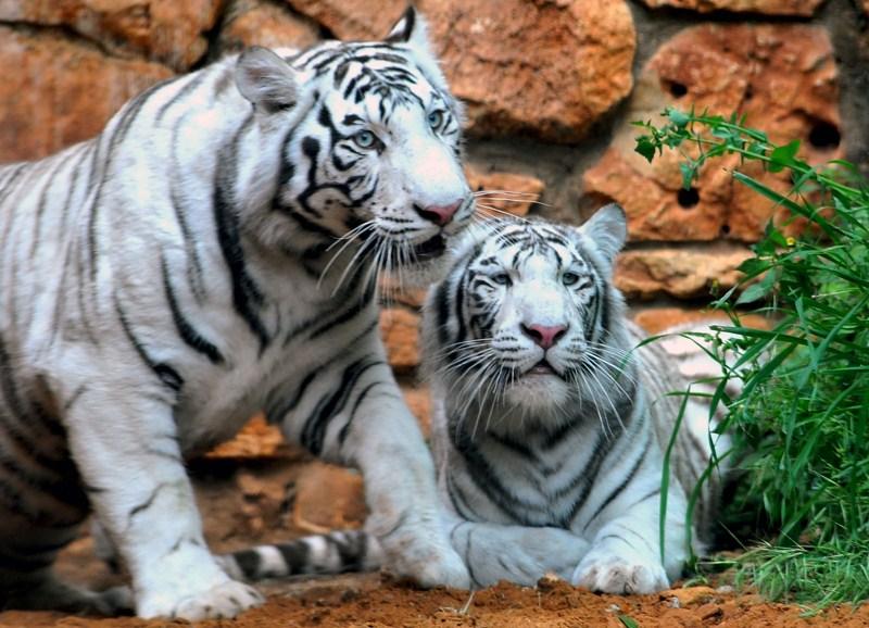 Зоопарк в Хайфе - аттракция для детей