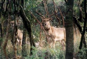 Маршруты прогульщика - Ночная охота на кабанов - Prichal.com - Всё о туризме в Израиле