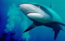 Акула в парке подводной обсерваторрии Эйлата - Израиль
