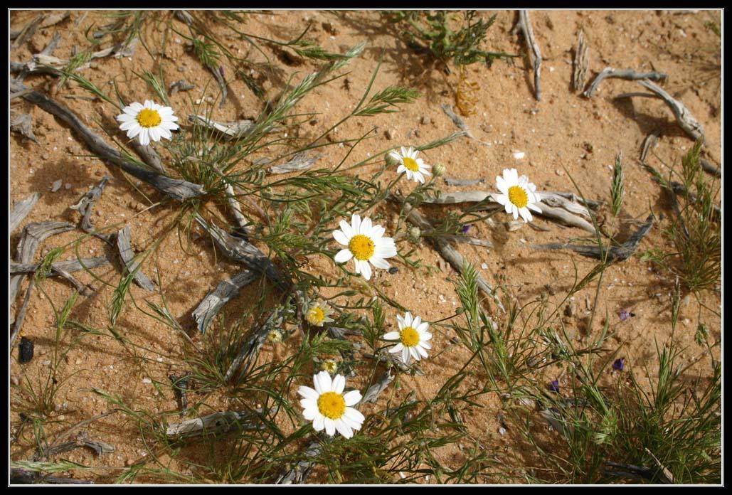 Иудейская пустыня весной - израиль