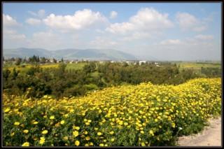 погода в Израиле, месяц, температура, город, центр
