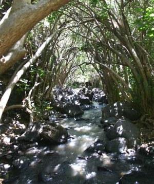 Водный маршрут - ручей Джилабун - голанские высоты - Израиль