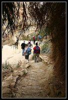 тростниковый коридор ведущий к водопаду в ручье давида - Эйн Геди - Израиль
