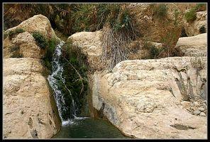 Вода в заповеднике нахаль давид - ручей давида - - Эйн Геди - Израиль