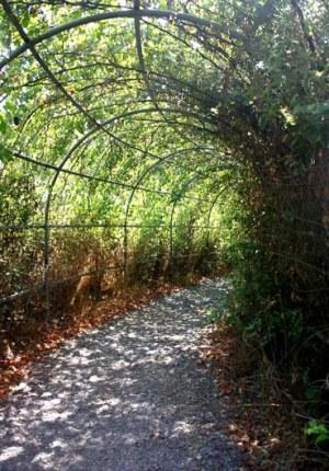 Маршрут, проходящий по суше, местами проходит под цветущими, тенистыми арками