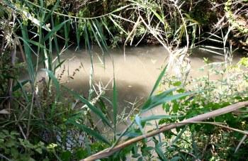 Водный маршрут большей своей частью находиться в тени склонившихся деревьев и кустов, а прохладная вода ручья делает его безупречным летним маршрутом с купанием и играми в воде.